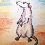 eine weiße Ratte