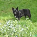 Suchhund Casper