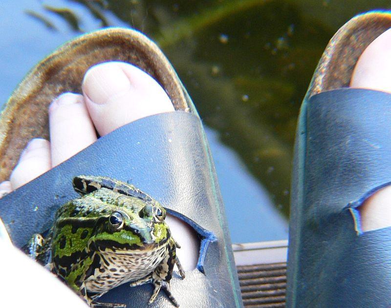 Frosch auf Fuß